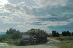 Termine_Grosso_17_luglio-4-Copy